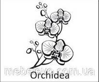 Novelty Orchidea