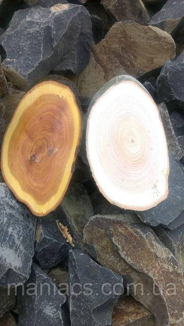 Зріз дерева. Дуб 16 - 20 см