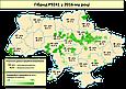 Семена кукурузы П9241/Р9241 AQUAmax (ФАО 360) Форс Зеа, фото 3