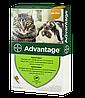 Капли на холку Адвантейдж для котов до 4 кг
