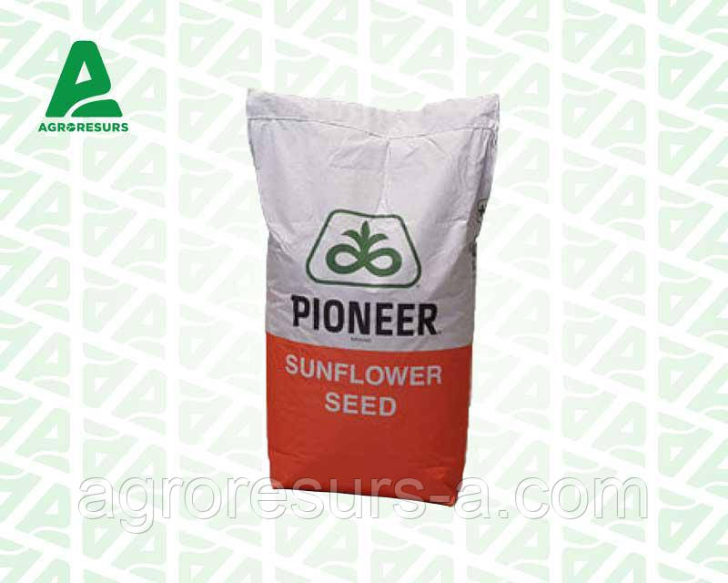 Семена подсолнечника П62ЛЛ109 Круизер, Пионер