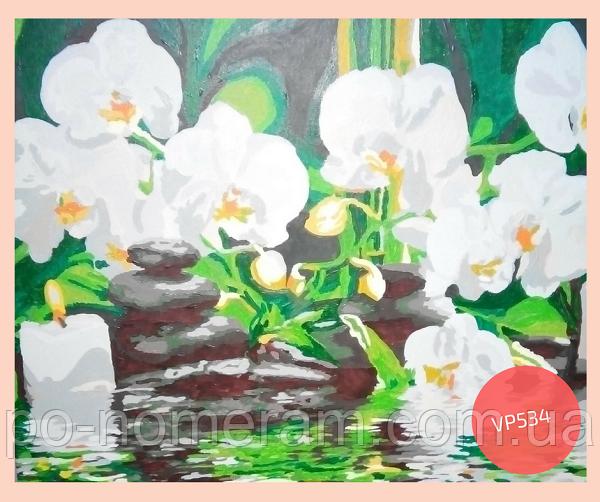 Раскраска по номерам орхидеи