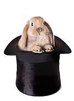 Фотообои ArtWalls Фотообои: Волшебный кролик ArtWalls-00079 Глянец