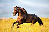 Фотообои ArtWalls Фотообои: Лошадь на скаку ANI-039 Глянец