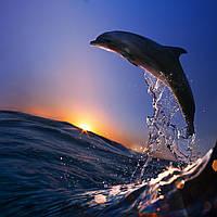 Фотообои ArtWalls Фотообои: Дельфин на рассвете ANI-045 Глянец