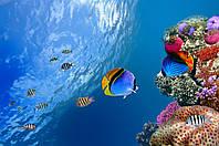 Фотообои ArtWalls Фотообои Волшебный подводный мир NAT-160 Глянец