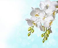 Фотообои ArtWalls Фотообои: Белые цветы 2 NAT-189 Глянец