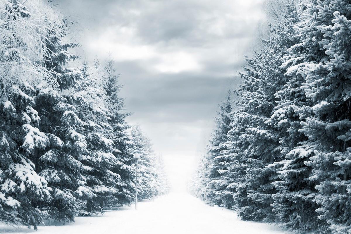 Фотообои ArtWalls Фотообои Еловая аллея зимой ArtWalls-00045 Глянец