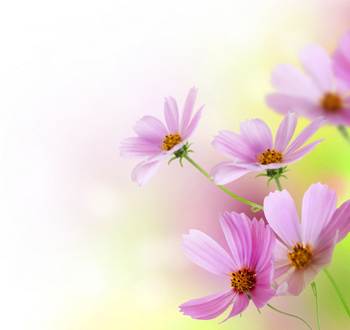 Фотообои ArtWalls Фотообои: Розовые цветы flowers00021 Глянец
