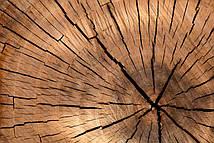 Фотообои ArtWalls Фотообои Дерево DN-1 Глянец