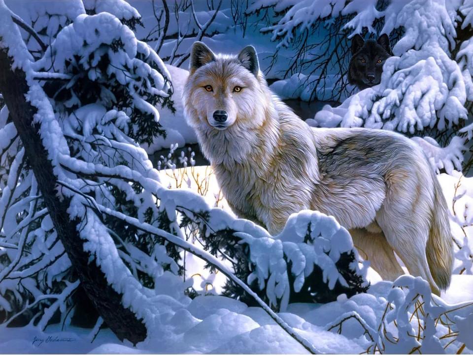 """Алмазная вышивка 40х30см - набор """"Белая волчица 2"""""""