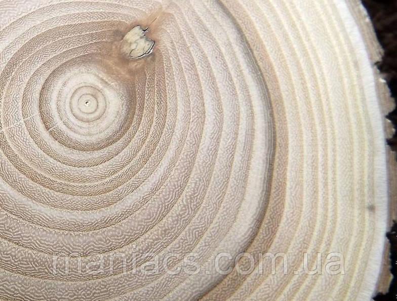 Срез дерева. Ясень 31 - 35 см