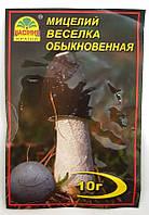 Мицелий гриба Веселка обыкновенная, 10г