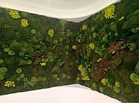 Стена из мха, фото 1