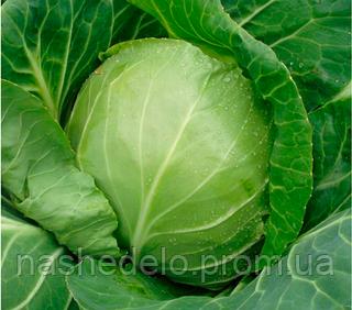 Семена капусты б/к Оракл F1 2500 семян Clause