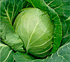 Семена капусты б/к Оракл F1 10000 семян Clause