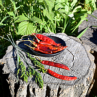 Жгучий перец Чили
