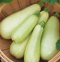 Семена кабачка Искандер F1 (Eskanderany), 500 семян, Seminis (Семенис)