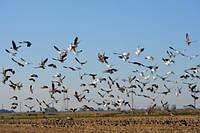 Против птиц