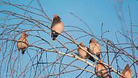Репеллент для отпугивания птиц