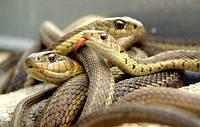 Репеллент для отпугивания змей