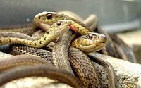 Против змей