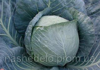 Семена капусты б/к Браво F1 2500 семян Clause