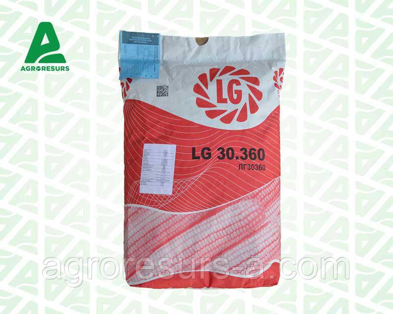 Семена кукурузы ЛГ30360/LG30.360 (ФАО 340)