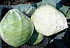Семена капусты б/к Мандарин F1 10000 семян Clause