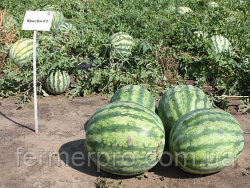 Семена арбуза Крисби F1 1000 семян Nunhems