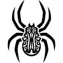 Павуки та скорпіони