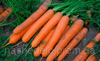 Семена моркови Сатурно F1 100000 семян Clause