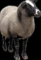 Одеяла овечья шерсть