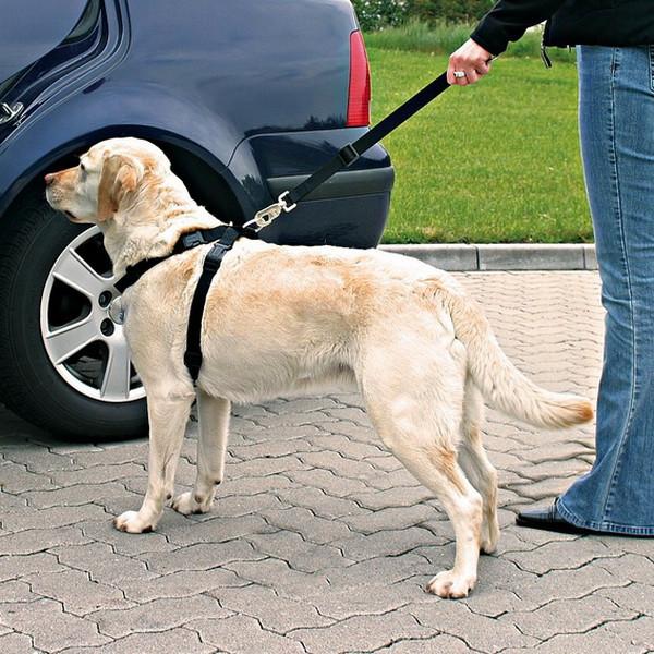 Чему учить собаку для получения желаемого поведения?