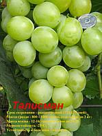 Виноград столовый Талисман (Кеша-1, Кеша мускат, Супер Кеша, Кеша-2) сорт ранний., фото 1