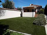 Декоративна ландшафтна трава для саду дитячих майданчиків басейнів Stella Verde, фото 2