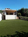 Декоративна ландшафтна трава для саду дитячих майданчиків басейнів Stella Verde, фото 5