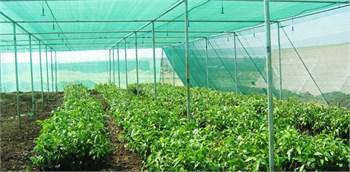 Затеняющая сетка Raschelnet 30% зеленая 7,5х50м, фото 2