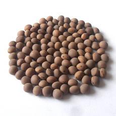 Семена вики