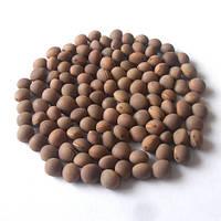 Семена вики яровой БЕЛОЦЕРКОВСКАЯ 34 элита 1 репродукция