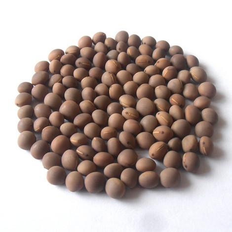 Семена вики озимой ПОЛТАВСКАЯ 77 элита 1 репродукция