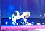 "Аттракцион ""Дойная корова"", фото 2"