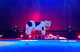 "Аттракцион ""Дойная корова"", фото 3"