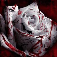 Egrow 100Pcs / Pack Кровавая роза Семена Сад Бонсай Комнатные растения Flower Семена