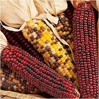 Egrow 10Pcs / Pack Mix Цвет Кукуруза Семена Фруктовая растительность Семена Сад Украшение Бонсай Растение