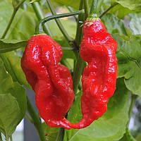 Egrow 200Pcs Индийские Призрачные Перцем Семена Чили Семена Растительные Редкие Красные Каролина Перечные Семена