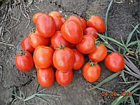 Семена томата Чезена F1 5000сем. Erste Zaden, фото 1