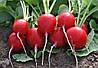 Семена редиса Прада F1 10000 сем. Erste zaden.