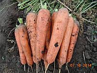 Морковь Тема 5000 сем. Ерсте Заден, фото 1