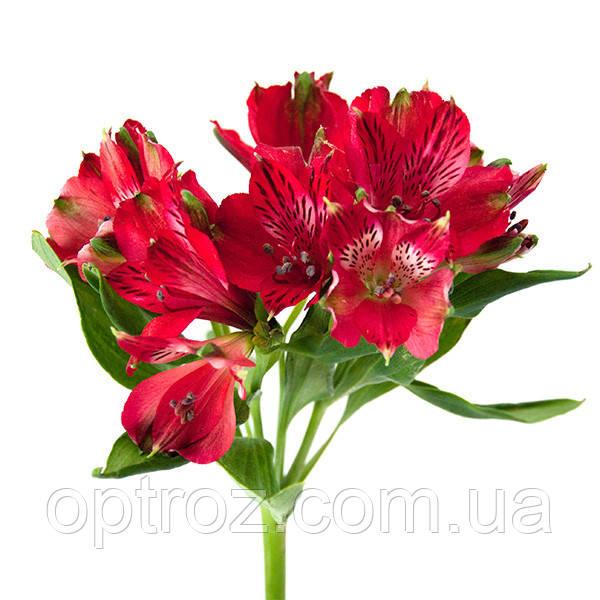 Подарить цветы в одессе оптом, доставкой цветы круглосуточно в санкт петербург дешево